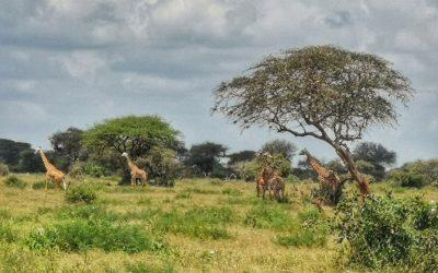 Podcast Episode #63: Kenia